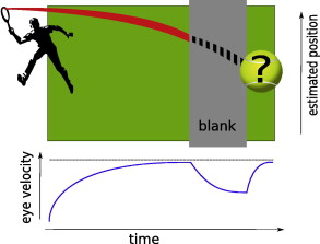 Role of motion-based prediction in motion extrapolation